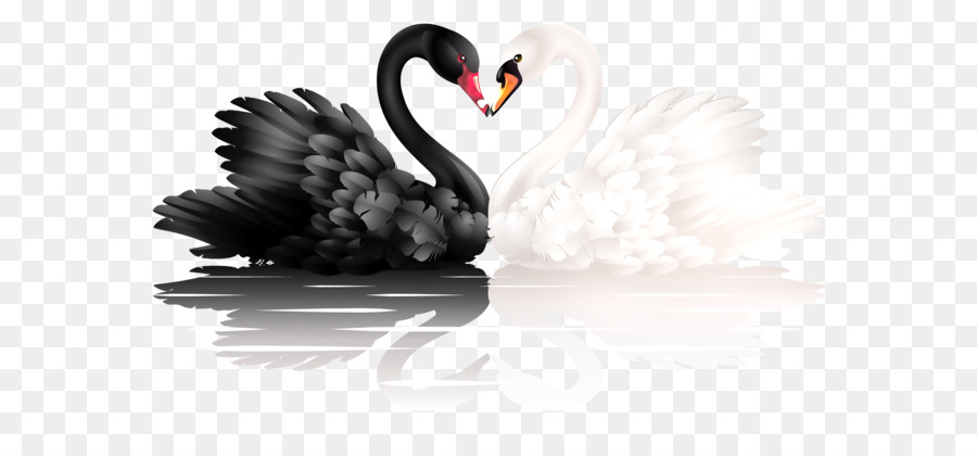Black swan international clipart image black and white stock Black Heart png download - 2748*1698 - Free Transparent Black Swan ... image black and white stock