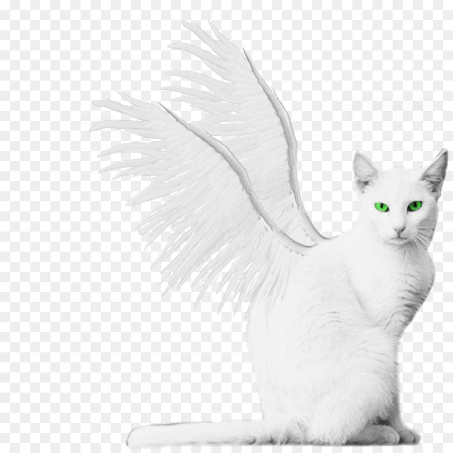 Black turkish van clipart jpg library Cats Cartoon png download - 894*894 - Free Transparent Turkish Van ... jpg library