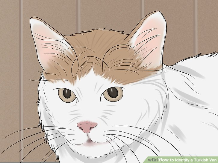 Black turkish van clipart png black and white library 3 Ways to Identify a Turkish Van - wikiHow png black and white library