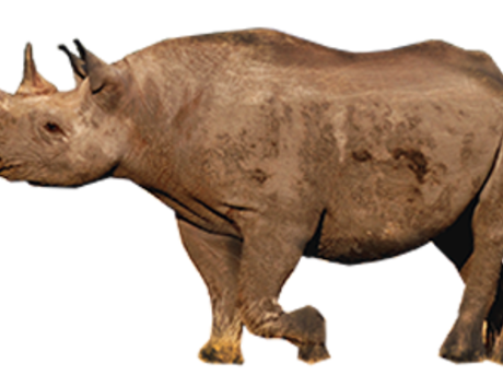 Black vs white rhino clipart image stock Rhino | Species | WWF image stock