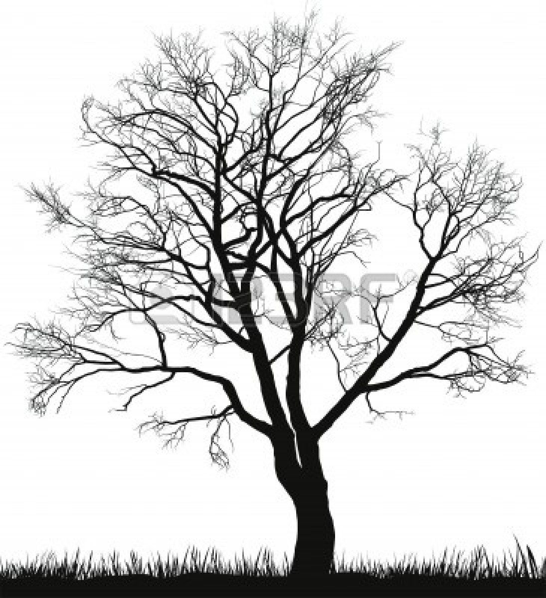 Black walnut leaf clipart black and white image royalty free Black walnut | Tattoos in 2019 | Tree illustration, Tree silhouette ... image royalty free