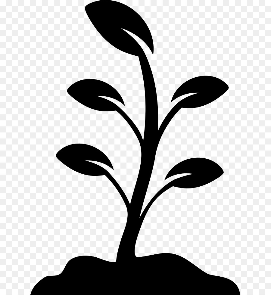 Black walnut leaf clipart black and white vector transparent Black And White Flower png download - 699*980 - Free Transparent ... vector transparent
