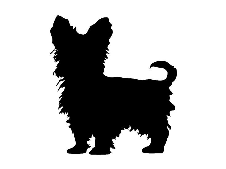 Black yorkie birthday clipart vector freeuse download Yorkshire Terrier Cliparts | Free download best Yorkshire Terrier ... vector freeuse download