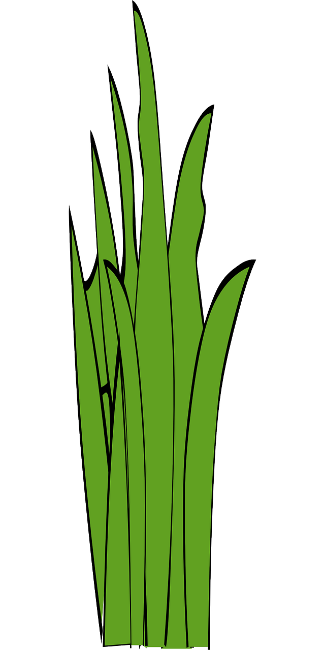 Blades of grass clipart transparent clip art royalty free library Blades Of Grass Grass Weed PNG - Picpng clip art royalty free library