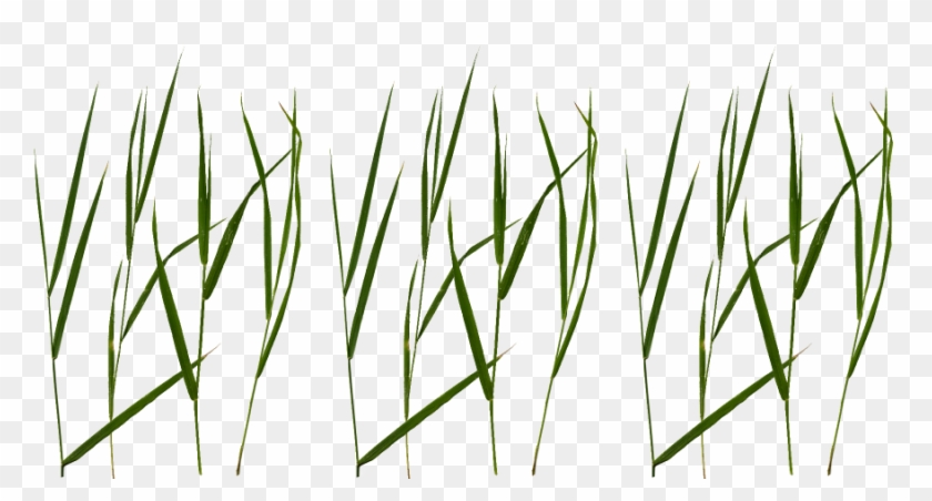 Blades of grass clipart transparent clipart freeuse Grass Png Texture - Grass Blade Texture Png, Transparent Png ... clipart freeuse