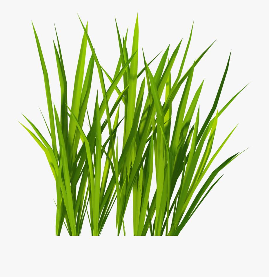 Patch of dirt in tall grass clipart jpg free download Sea Grass Clipart Blades Grass - Green Grass Png #157425 - Free ... jpg free download