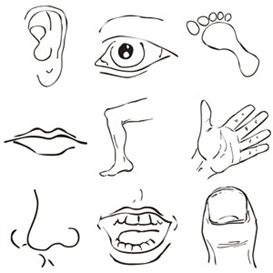 Blank body parts clipart svg royalty free body images clip art | Body Parts Clipart | Other Files | Clip Art ... svg royalty free