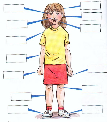 Blank body parts clipart image royalty free Parts of the body explained for children | Body and organs KS1 ... image royalty free