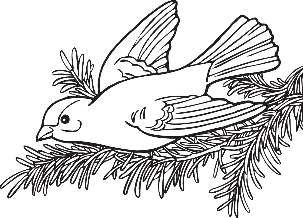 OnlineLabels Clip Art - Coloring Book Willow Goldfinch graphic freeuse download