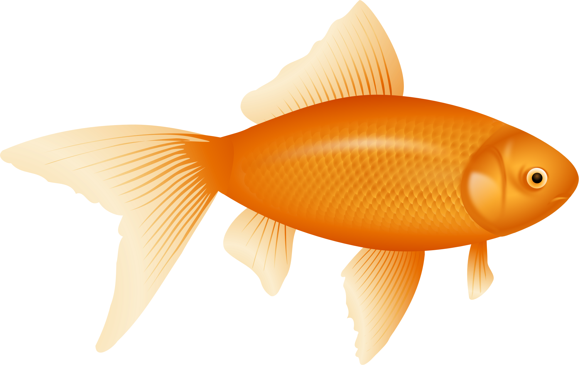 Blank fish clipart clip art royalty free Gold Fish Clipart Different Fish Free collection | Download and ... clip art royalty free