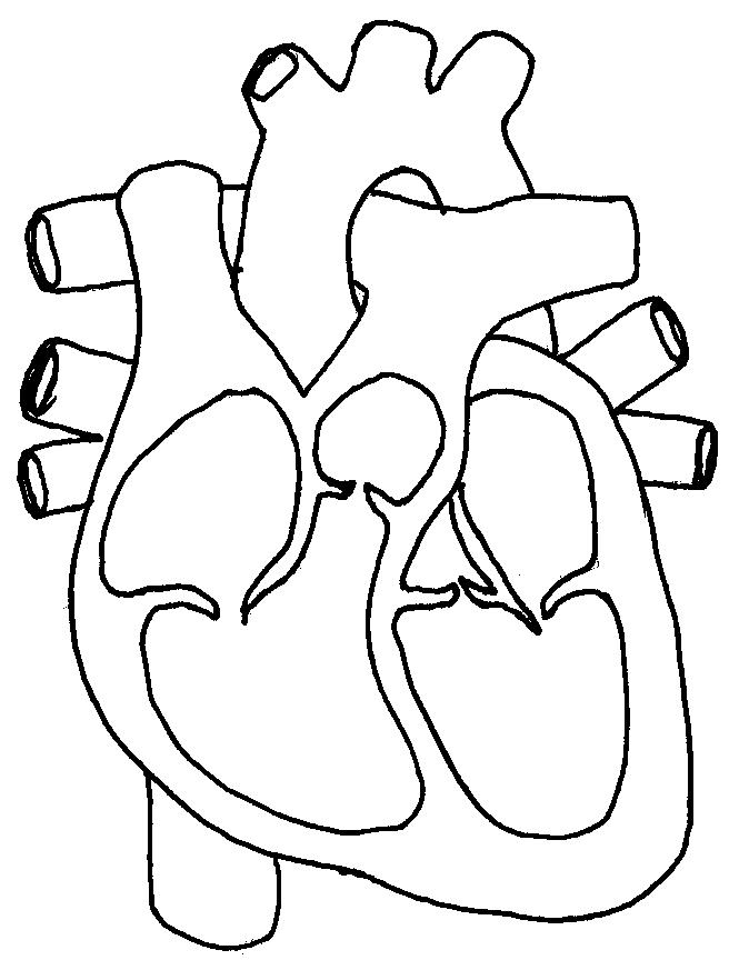 Blank label human heart clipart black and white clip art stock Free Unlabelled Diagram Of The Heart, Download Free Clip Art, Free ... clip art stock