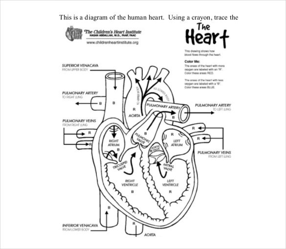 Blank label human heart clipart black and white png freeuse library 19+ Heart Diagram Templates – Sample, Example, Format Download ... png freeuse library