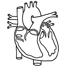 Blank label human heart clipart black and white banner black and white stock Image result for circulatory system for kids black and white to ... banner black and white stock