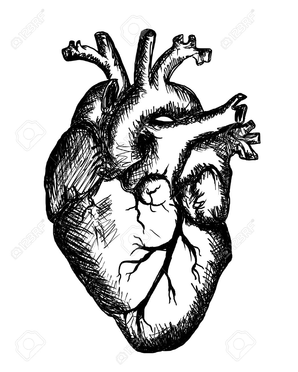 Blank label human heart clipart black and white picture free Human Heart Clipart Black And White | Free download best Human Heart ... picture free