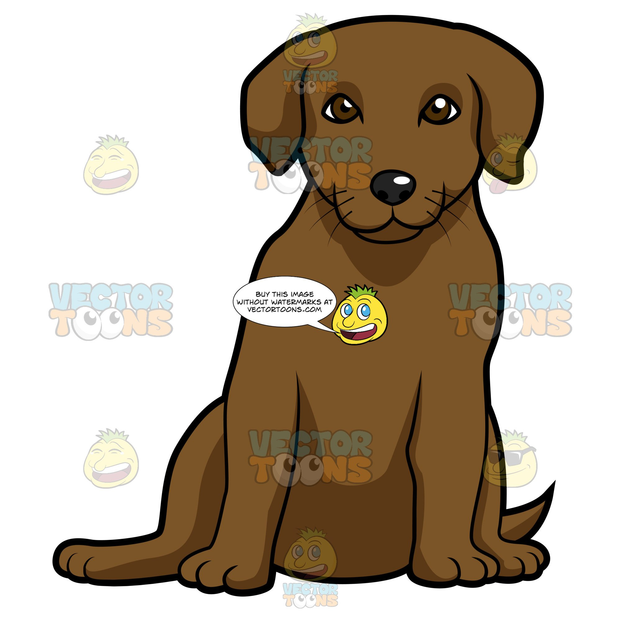 Blbrownck lab clipart clip transparent Chocolate Labrador Puppy Sitting Down And Looking Straight Ahead clip transparent