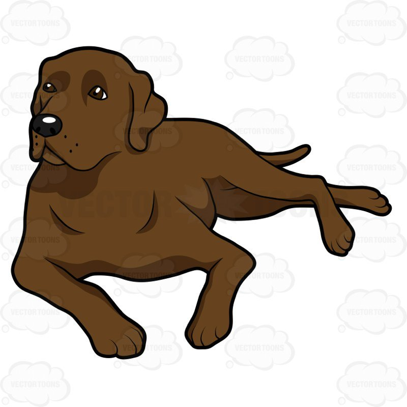 Blbrownck lab clipart stock Clipart chocolate lab » Clipart Portal stock