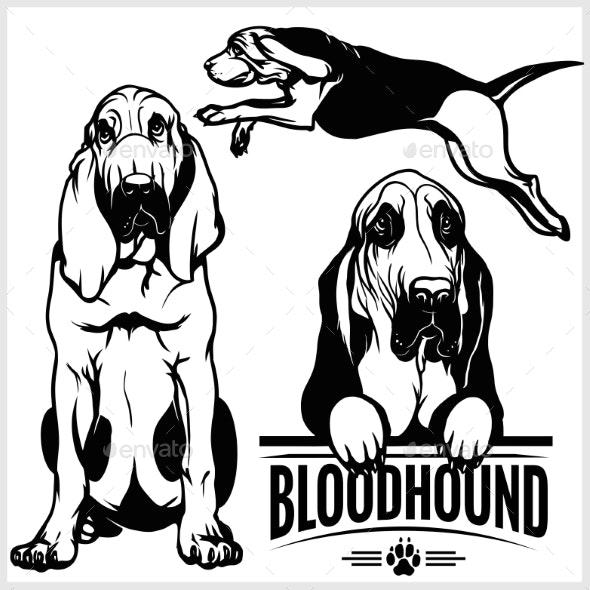 Bloodhound dof clipart jpg black and white Bloodhound Dog - Vector Set Isolated Illustration jpg black and white