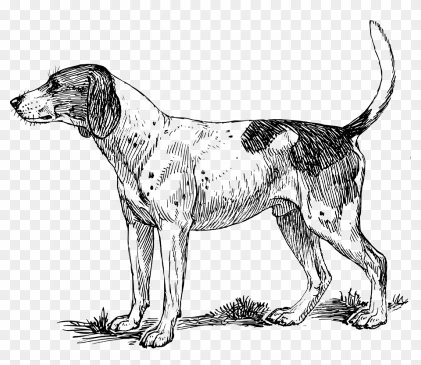 Bloodhound dof clipart transparent download Bloodhound Drawing Red Hound Dog - Hound Dog Clipart, HD Png ... transparent download