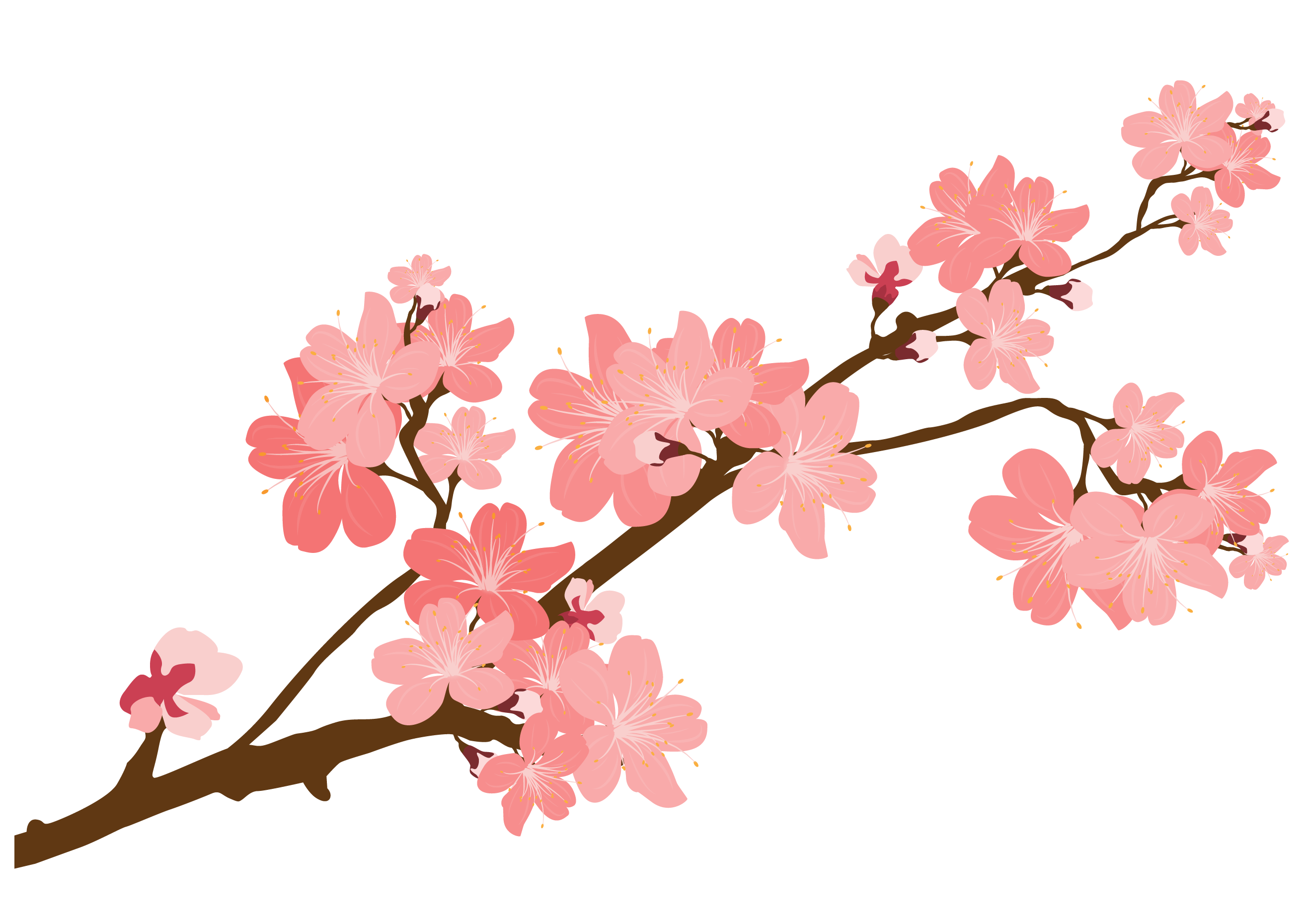 Blooming blossom clipart clip royalty free library Sakura blooming clipart images gallery for free download   MyReal clip royalty free library