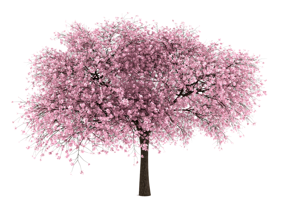 20 Free Tree PNG Images - Cherry Blossom | Entourage | PNG Cutouts ... png stock