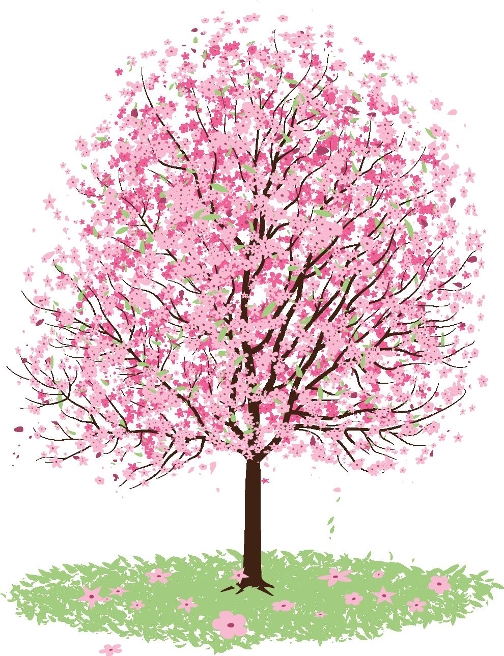 Clipart spring tree image library download Cherry blossom Tree Clip art - sakura 990*1289 transprent Png Free ... image library download