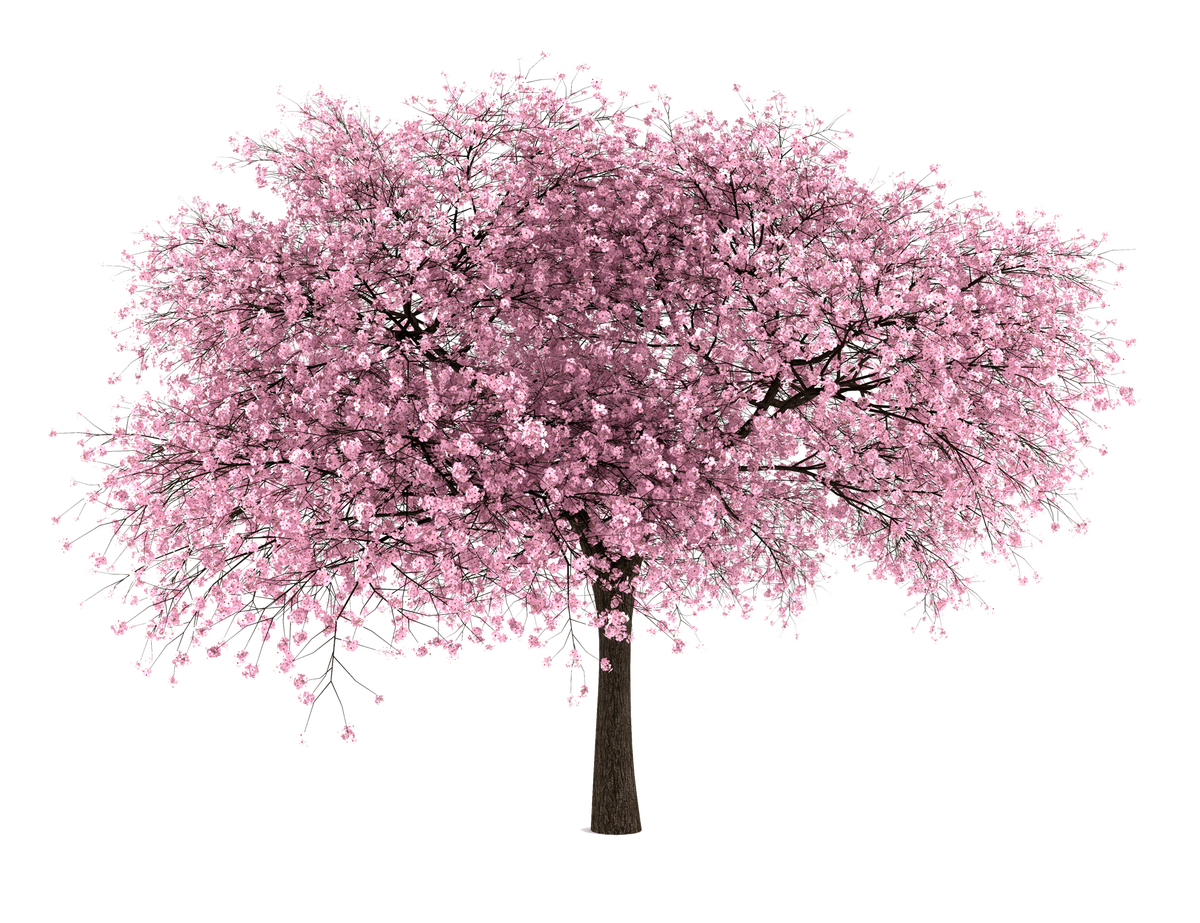 Blossom tree clipart clip art transparent stock 20 Free Tree PNG Images - Cherry Blossom - Dzzyn | Elements ... clip art transparent stock