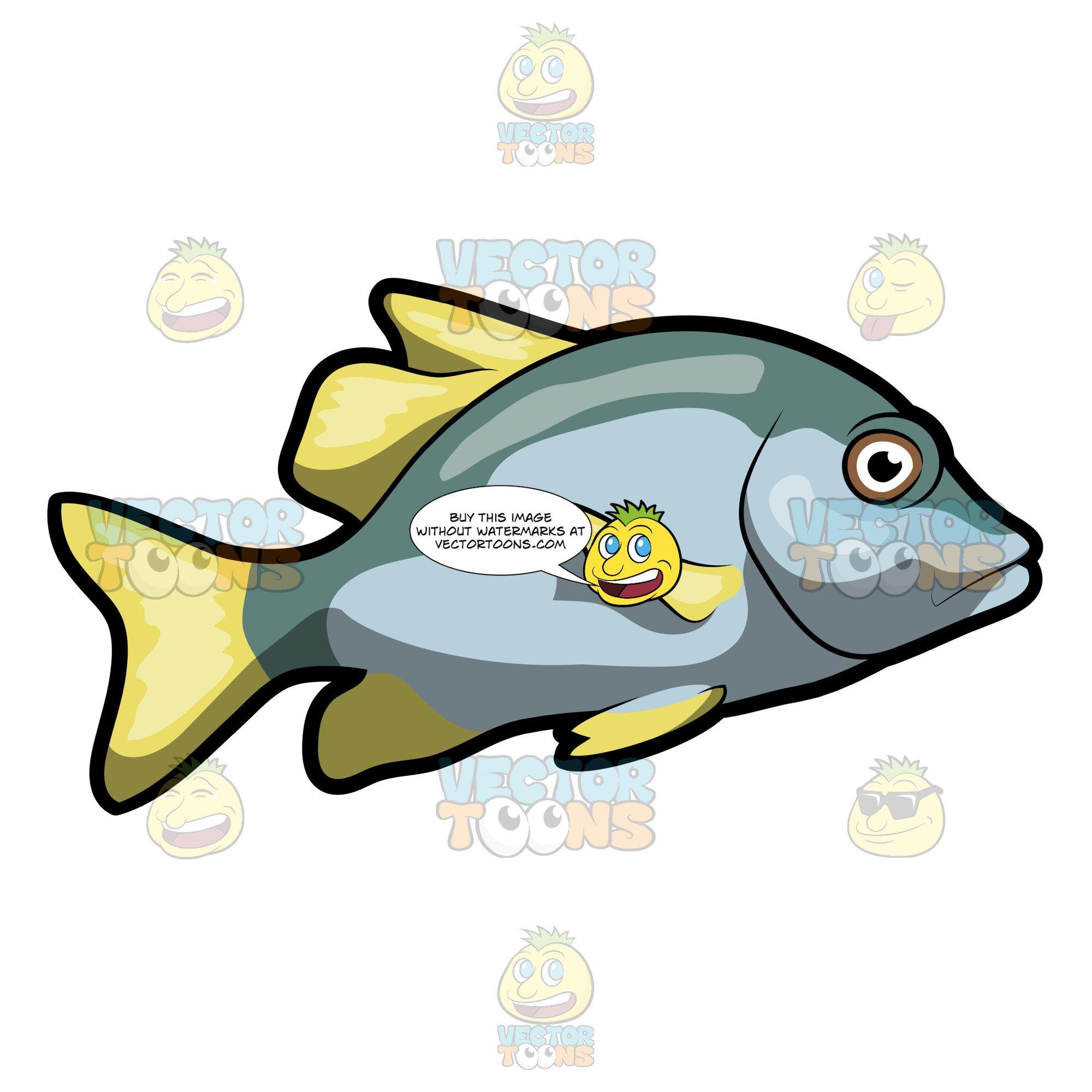 Blotch clipart picture free A Virginalis Blotch Fish picture free