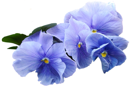 Blue and purple clipart jpg freeuse Blue Violet Clipart | Blue Flower in 2019 | Violet flower tattoos ... jpg freeuse