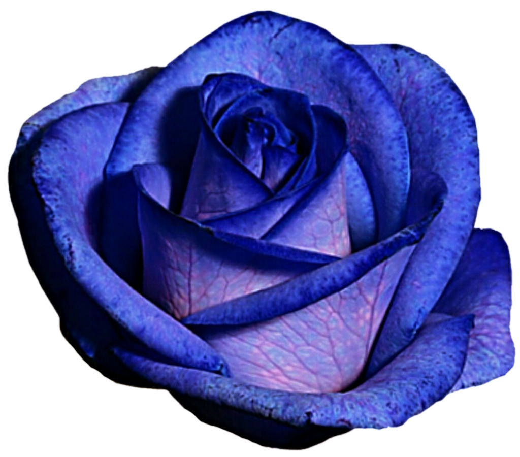 Blue and purple flower clipart clip art free stock Blue and Purple Rose by jeanicebartzen27 on DeviantArt clip art free stock