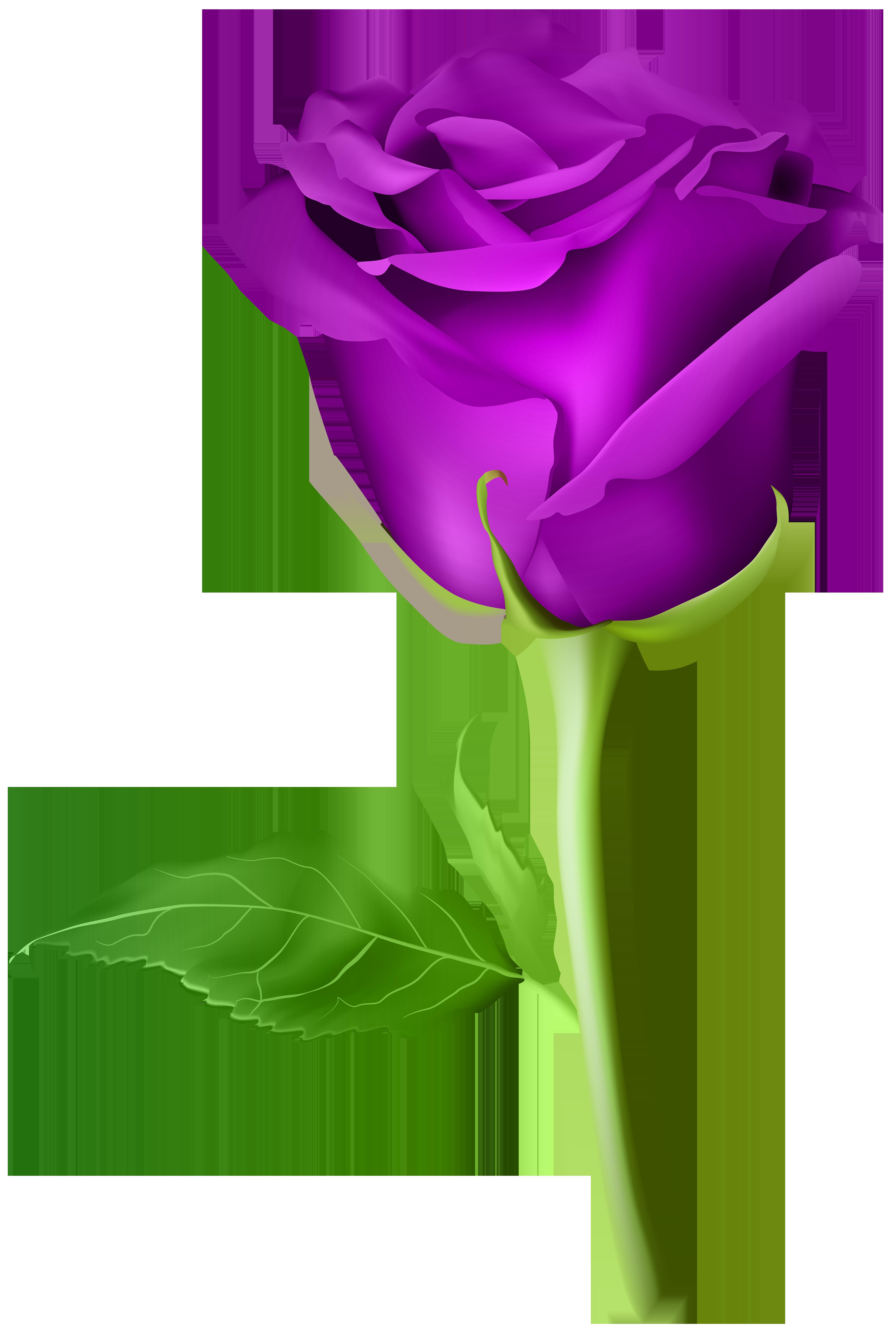 Blue and purple flower clipart image library download Blue rose Orange Clip art - art background 4721*7000 transprent Png ... image library download