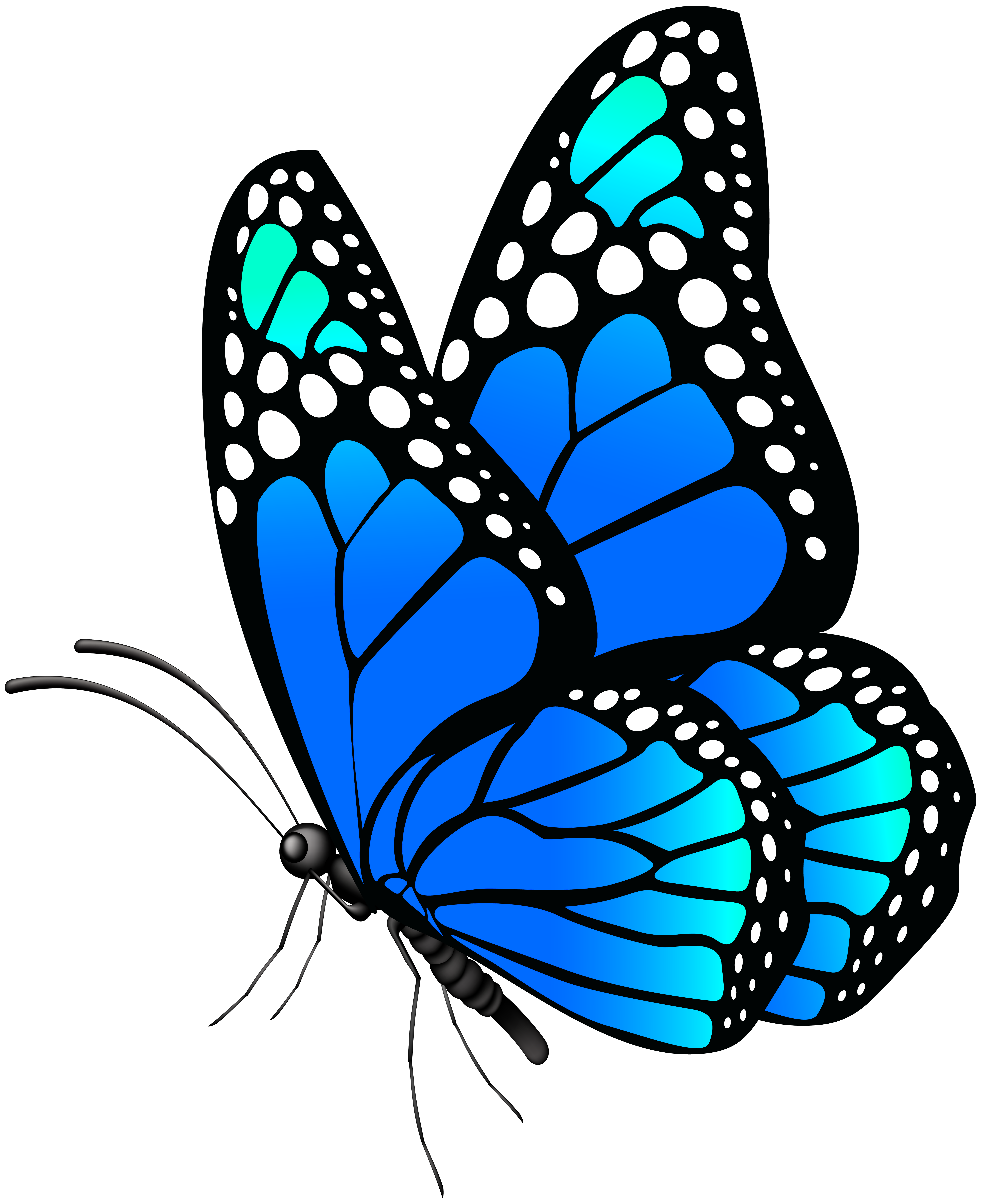 Clipart blue butterfly image black and white Butterfly Blue PNG Clip Art Image | Gallery Yopriceville - High ... image black and white