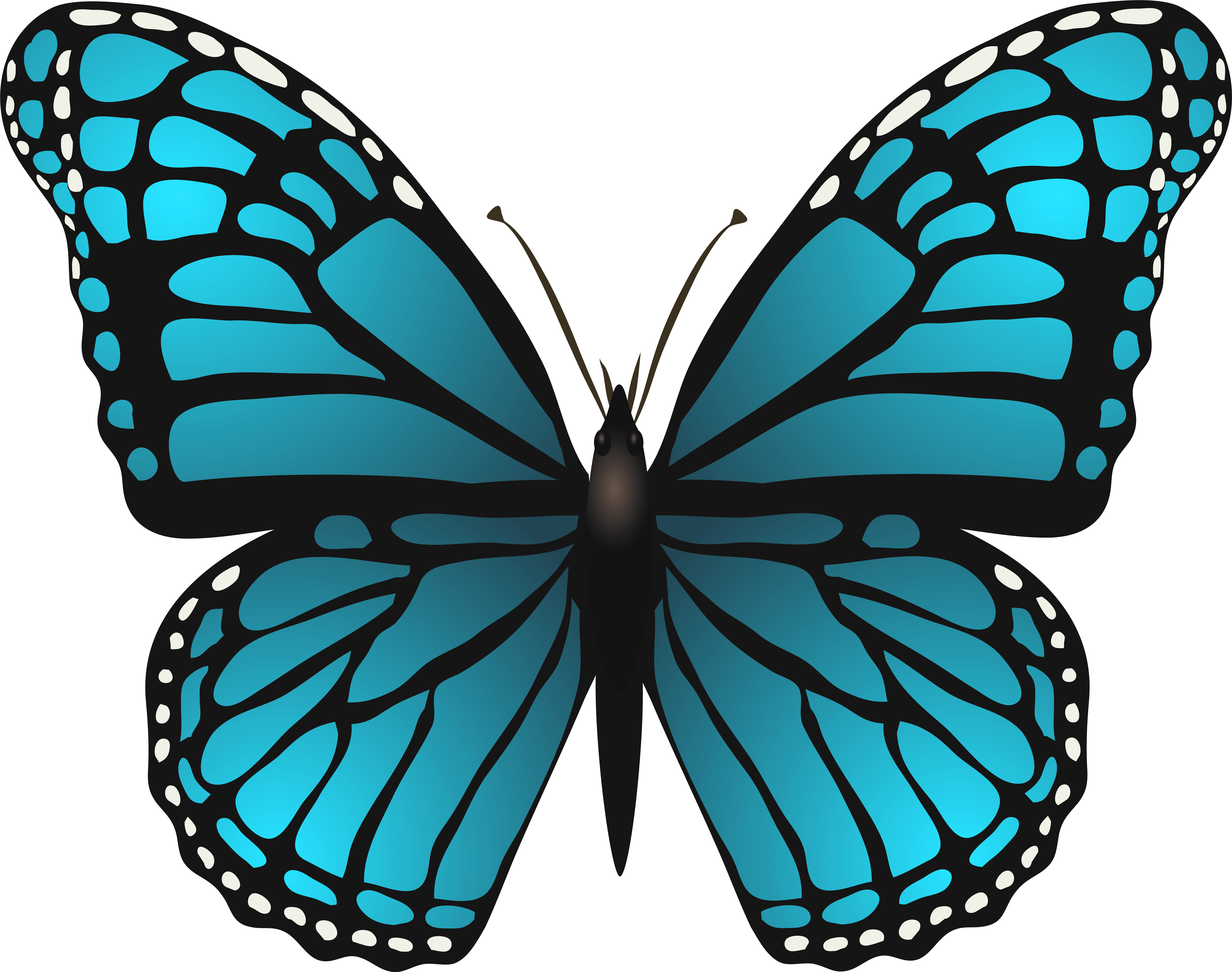 Blue butterfly images clipart