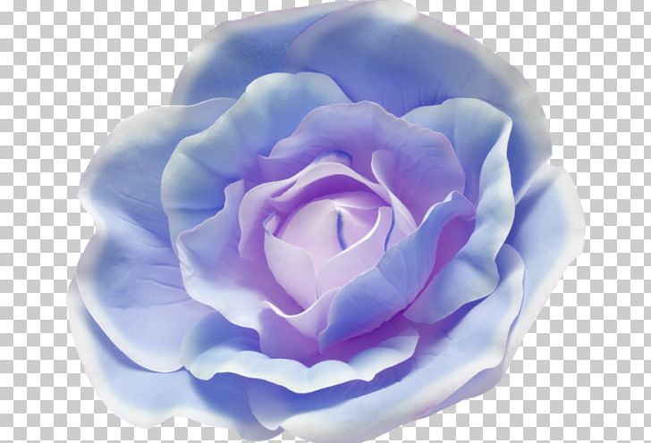 Blue cabbage rose clipart banner royalty free library Cabbage Rose Blue Rose Garden Roses Photography PNG, Clipart, Beach ... banner royalty free library