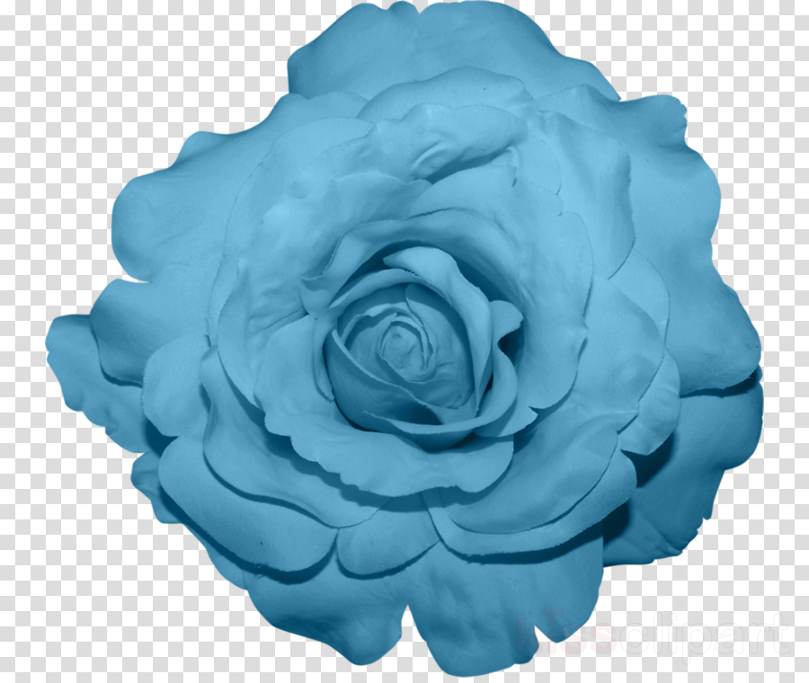 Blue cabbage rose clipart image library Garden Roses, Cabbage Rose, Blue Rose, transparent png image ... image library