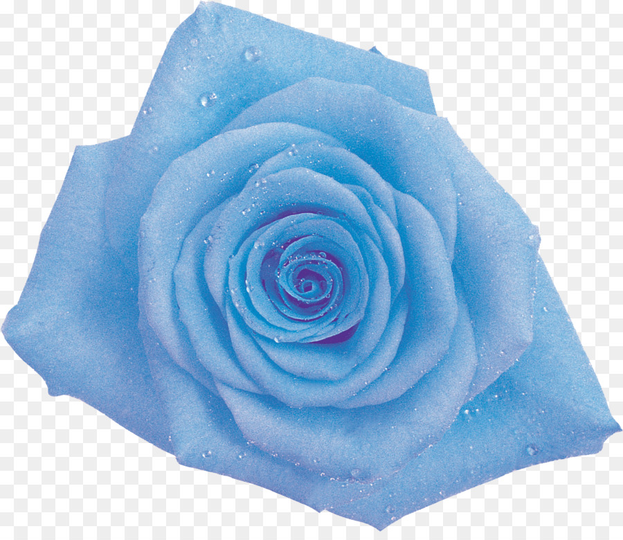 Blue cabbage rose clipart jpg royalty free Flowers Clipart Background png download - 1297*1107 - Free ... jpg royalty free