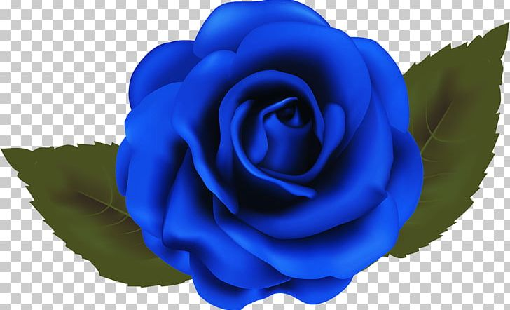 Blue cabbage rose clipart png library stock Garden Roses Blue Rose Beach Rose Cabbage Rose PNG, Clipart, Art ... png library stock