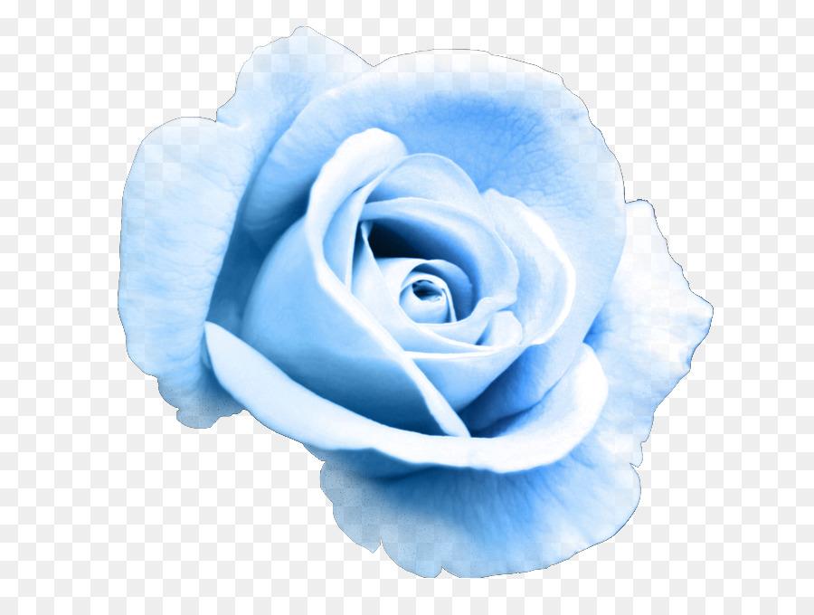 Blue cabbage rose clipart svg transparent Flowers Clipart Background clipart - Blue, Flower, Rose, transparent ... svg transparent