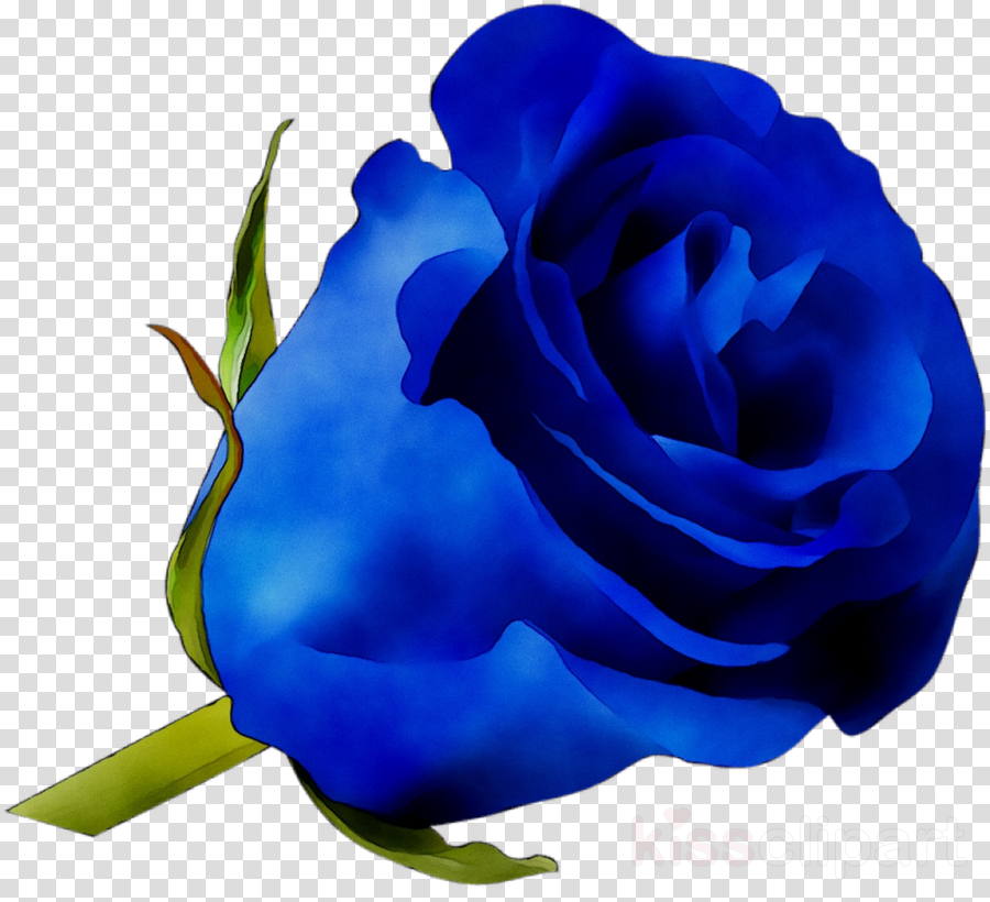 Blue cabbage rose clipart graphic royalty free stock Flowers Clipart Background clipart - Rose, Blue, Flower, transparent ... graphic royalty free stock