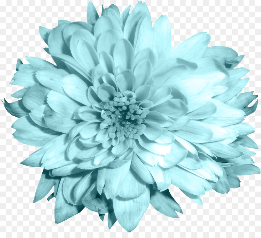 Blue chrysanthemum clipart vector freeuse Flowers Clipart Background png download - 1619*1441 - Free ... vector freeuse