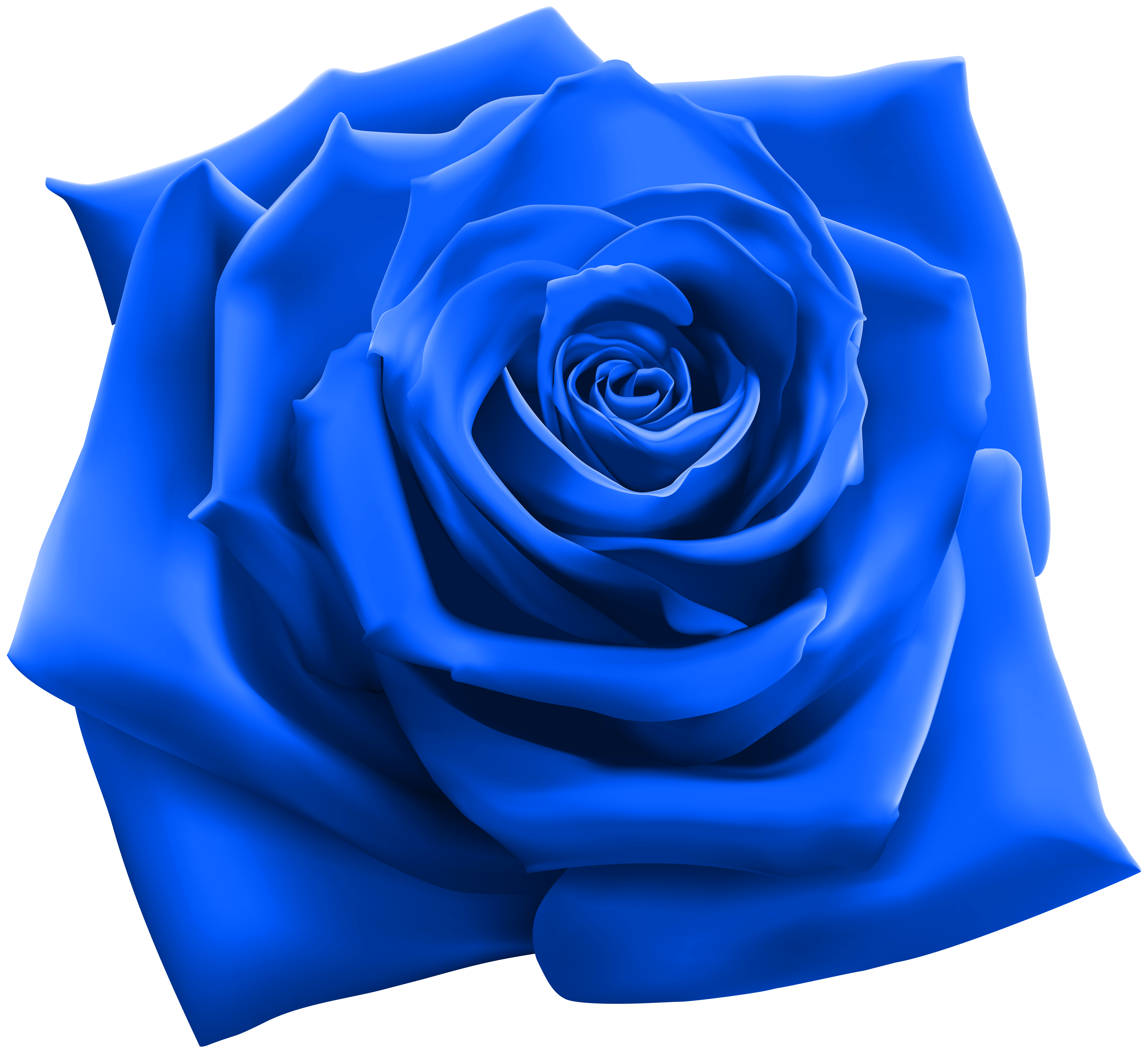 Blue clipart roses
