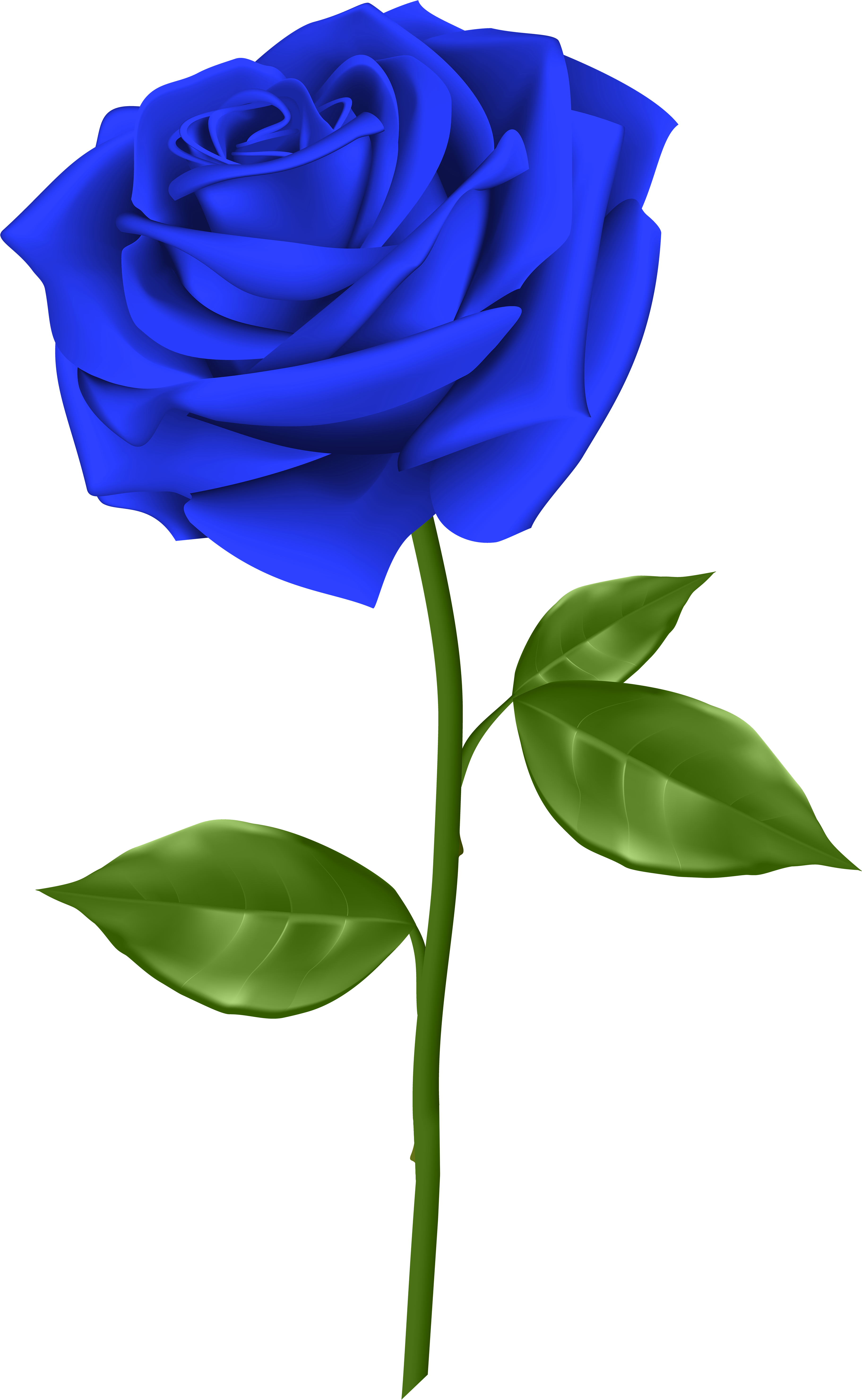 Short stem rose clipart clip freeuse library Svg Blue Rose Clipart - Blue Rose Transparent Background - Png ... clip freeuse library