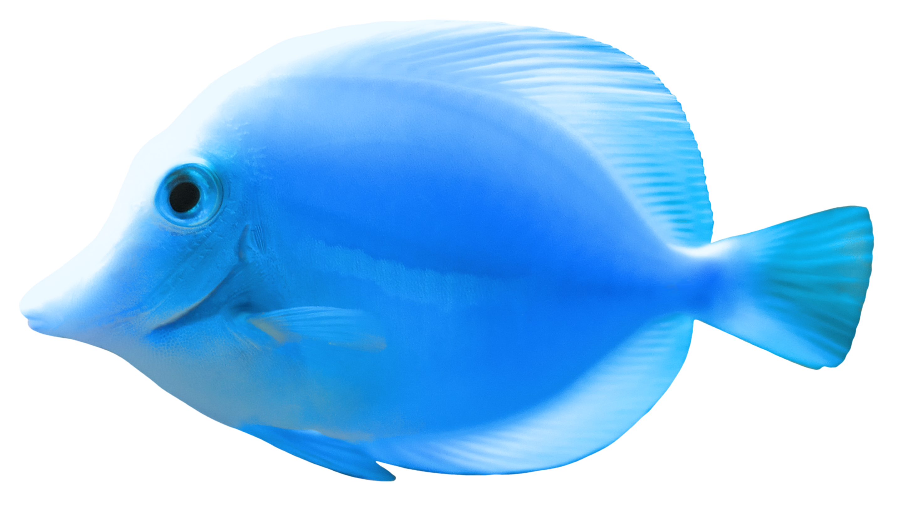 Group of fish clipart png clipart freeuse download Blue Fish PNG Clipart - Best WEB Clipart clipart freeuse download