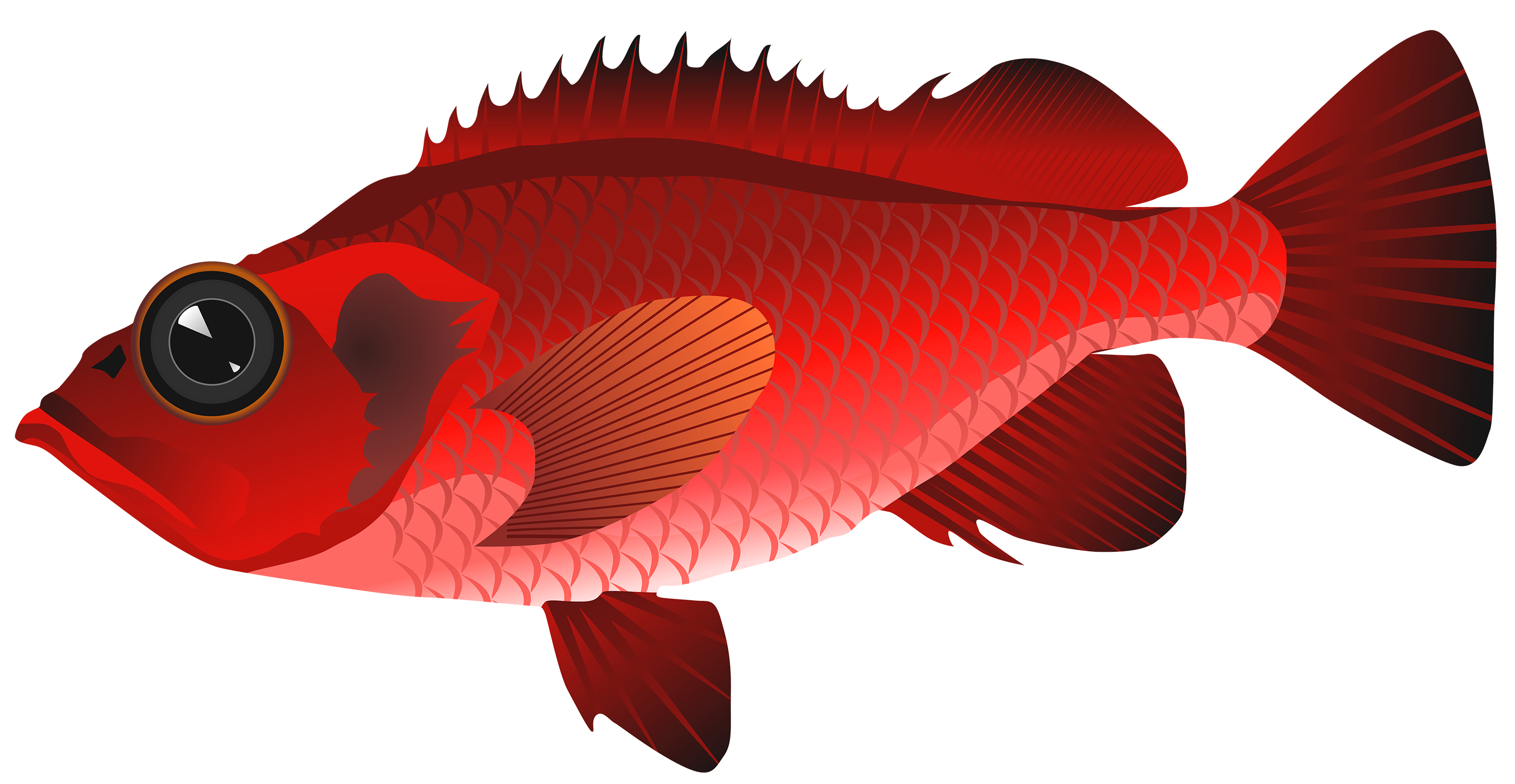 Red fish clipart jpg library Red Fish PNG Clipart - Best WEB Clipart jpg library
