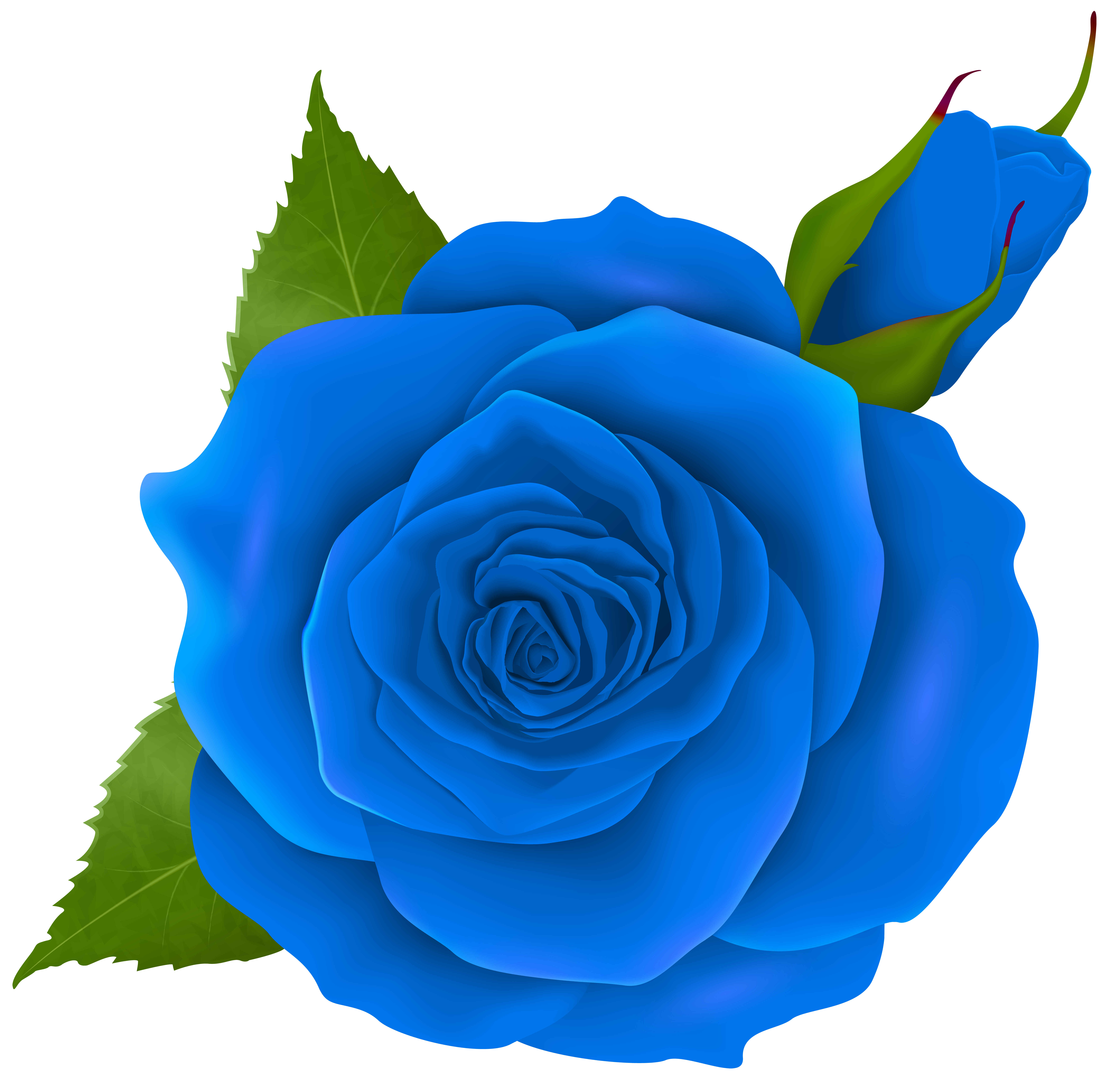 Blue Rose and Bud Transparent PNG Clip Art | Gallery Yopriceville ... clip download