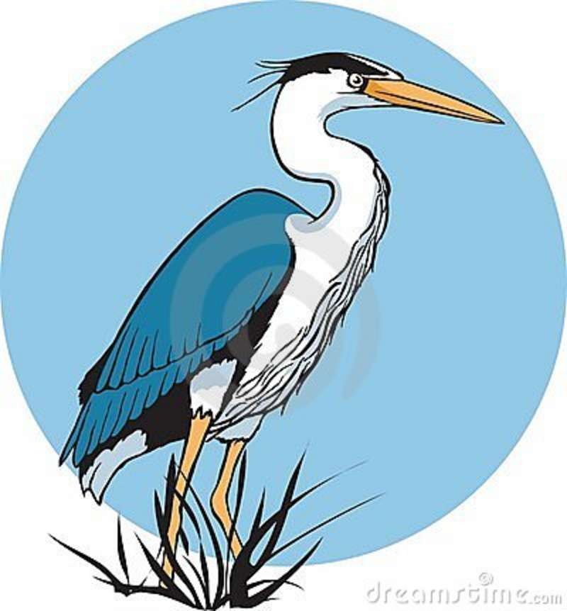 Blue heron pictures clipart graphic free Free Heron Clipart, Download Free Clip Art, Free Clip Art on Clipart ... graphic free
