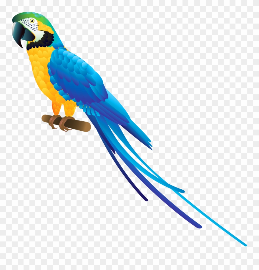Blue macaw clipart clip black and white library Blue Parrot Png Clipart - Blue And Yellow Macaw Clipart Transparent ... clip black and white library