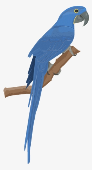 Blue macaw clipart banner freeuse Hyacinth PNG & Download Transparent Hyacinth PNG Images for Free ... banner freeuse