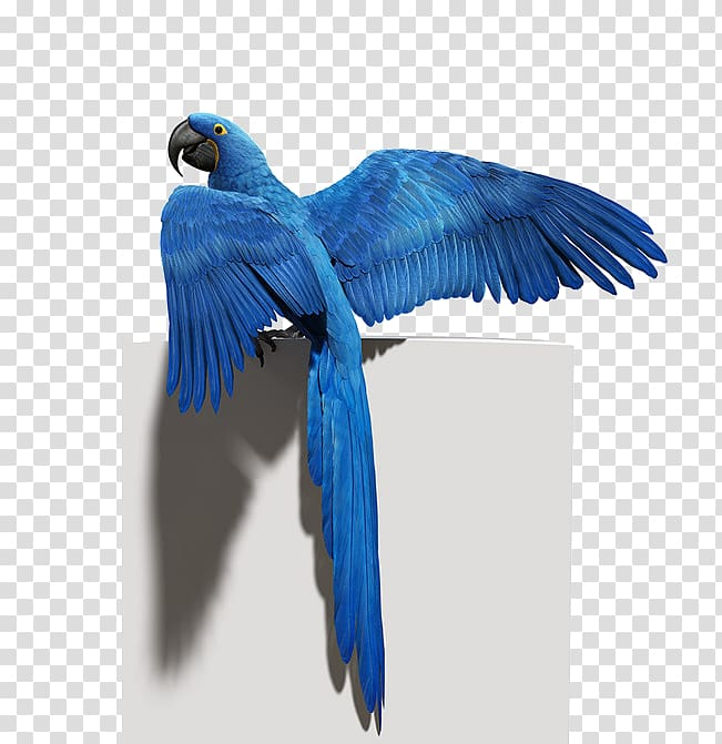 Blue macaw clipart svg library download Budgerigar Bird Parrot Macaw Feather, Blue Parrot material ... svg library download