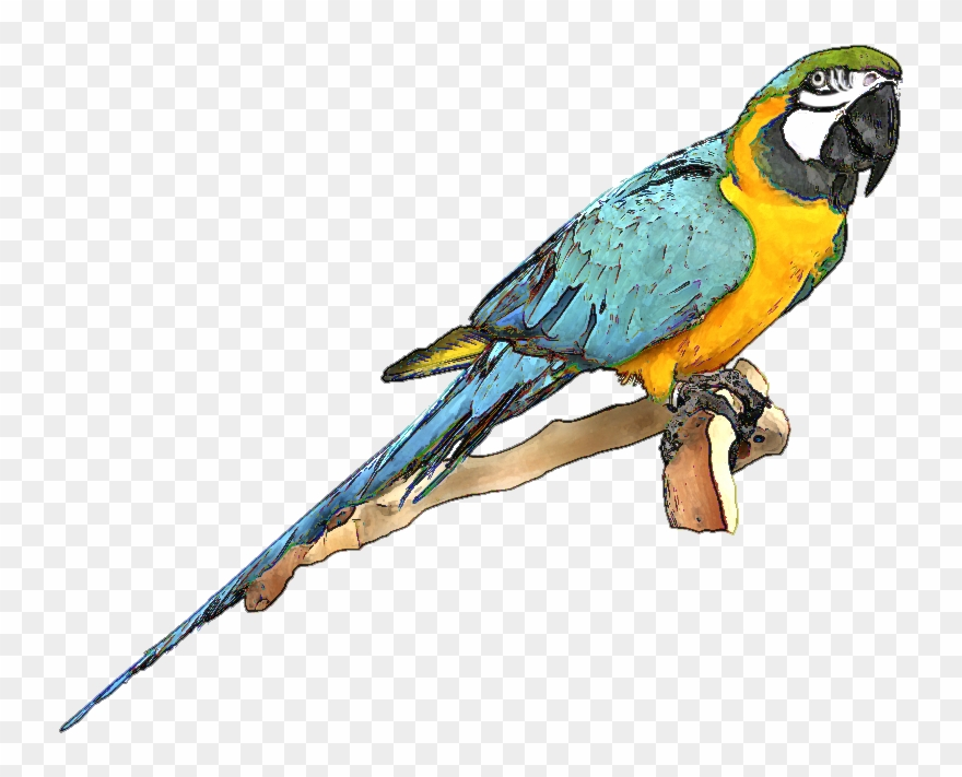 Blue macaw clipart free stock Blue And Gold Macaw Clipart - Macaw Clipart - Png Download (#154932 ... free stock