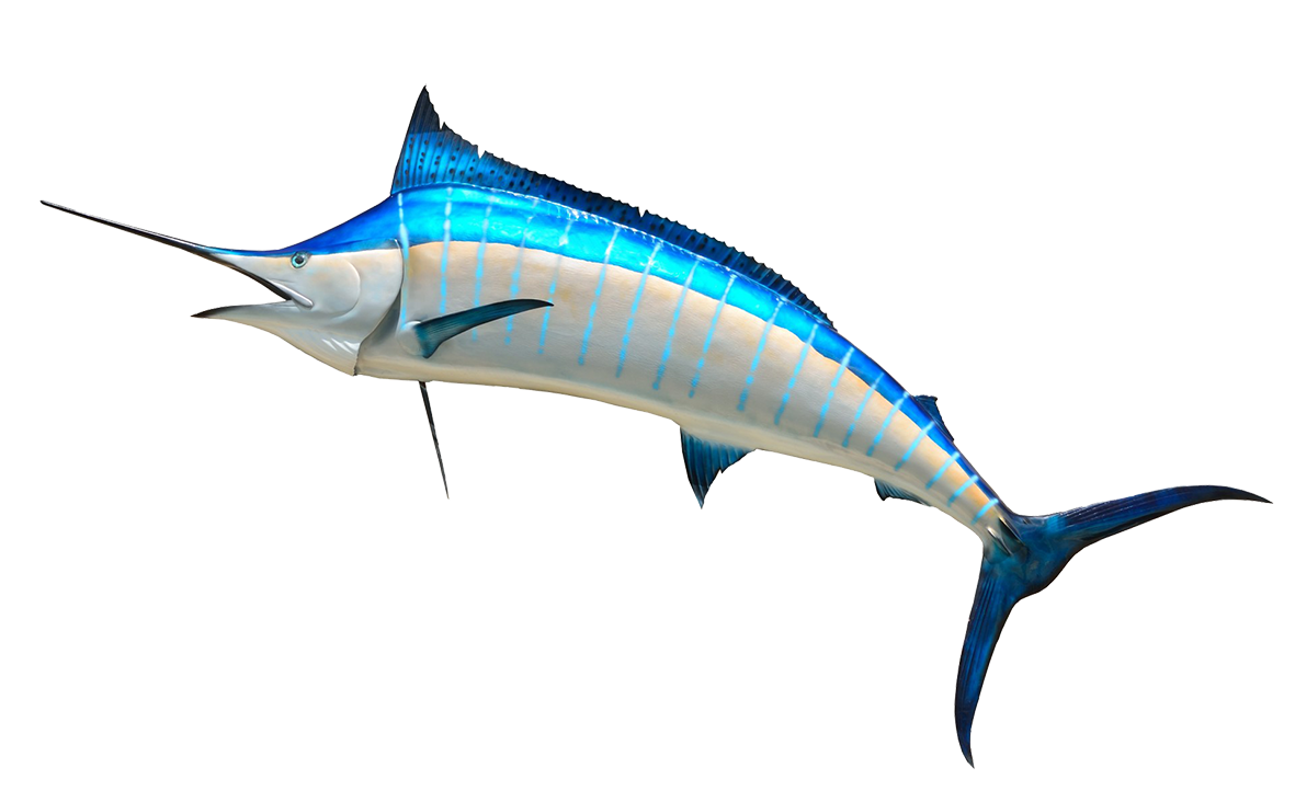 Fish Clipart Blue Marlin Free collection | Download and share Fish ... picture royalty free stock